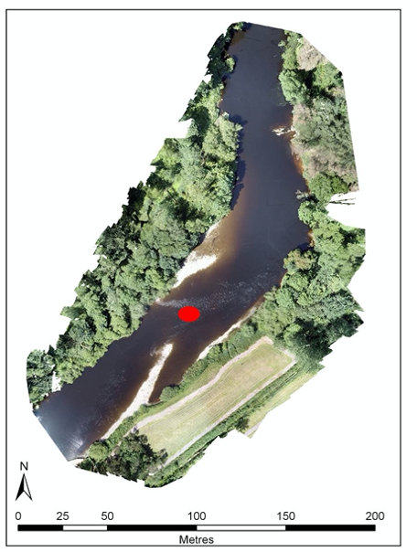 Newly formed habitat upstream of Fermoy weir (Run:Ruffle) following the breach of the weir. Red circle marks the location where 2 sea lamprey spawning redds were recorded in Summer 2019.
